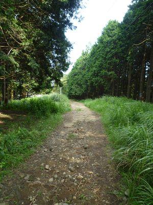 登り_砂利の林道