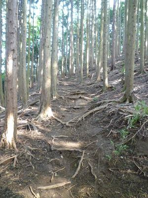 登り_木の根